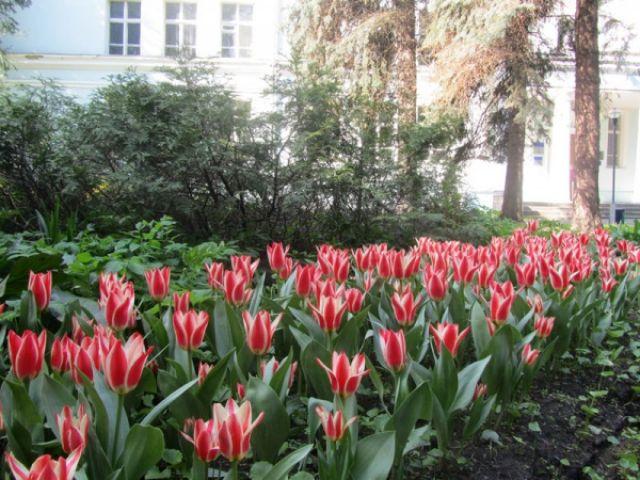Весна в МосГУ