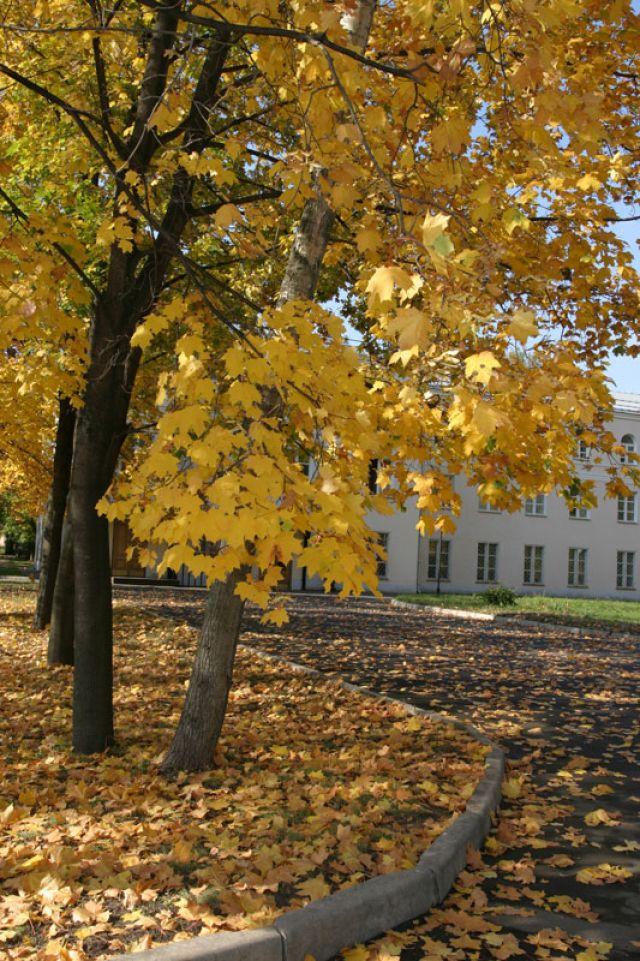 Осень в МосГУ